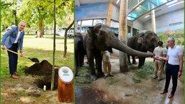 Faültetés és elefántsimogatás Nyíregyházán