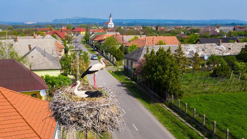 A képen Ősi településén fészkelő gólyapár látható; fotó: E.ON