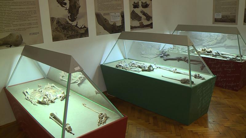 múzeumok éjszakája csontvázak