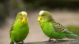Melyik legyen az év madara?