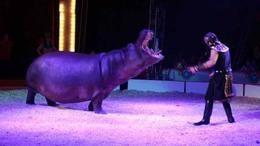 A játék lezárult! Nyerj páros belépőt a világhírű Eötvös Cirkusz kaposvári előadására!
