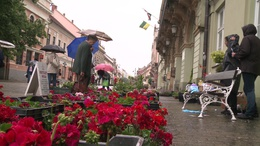 Virágba borul Kaposvár