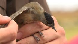 Október első hétvégéje a madármegfigyelésé
