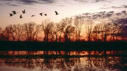 Vándormadarak terjesztik a fertőzést