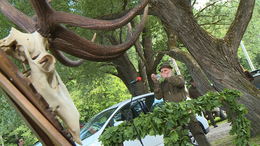 Erdőzúgás a Zselicben