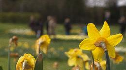Nincs olyan, hogy rossz idő, ha a Nárcisz-ünnepről van szó
