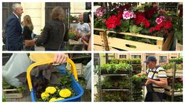 Ismét virágvásár Kaposváron