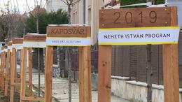 6000 darab új fát ültet Kaposvár