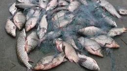 Félszáz halat fogott az állatkínzó orvhorgász