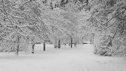 Mihez kezdjünk, ha leesik 25 cm hó?