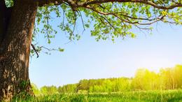 Egyre melegebb, szinte kora nyárias idő várható a héten