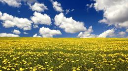Folytatódik a kellemes, késő tavaszias idő
