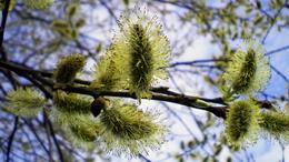 Megszűnik a hideg levegő utánpótlása, visszatér a tavaszias idő