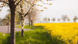 Továbbra is a szebbik arcát mutatja a tavasz