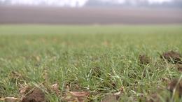 Az enyhe tél eddig kedvezett a gazdáknak