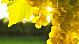 Folytatódik a szőlőérlelő szeptemberi nyár