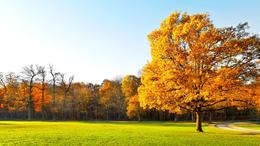 Kellemes kora őszi idő!