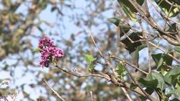 A természetet is megviccelte az indián nyár