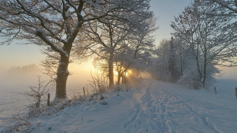 snow_trees_path_fog_frost_winter_roads_1366x768_51546.jpg