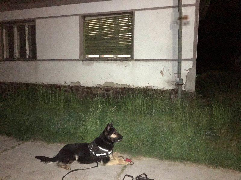nyomkereső kutya