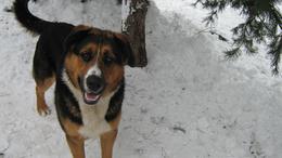 Pénzjutalom a kutya megtalálójának