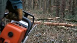 Természetvédelmi területről akart fát lopni, de elvinni már nem tudta