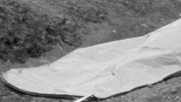 Holttestet találtak a barcsi erdőben