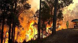 Kánikulában nagyobb az erdőtüzek veszélye
