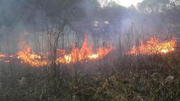 Videóval! Hétvégi házat, akácost is veszélyeztetett a tűz - avartüzek szezonja Somogyban