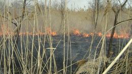 Lángol a nádas a Balatonnál