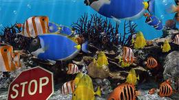 KRESZ oktatás a halaknak