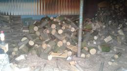 Engedély nélkül vágtak ki tíz köb fát