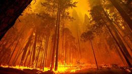 Közösen akadályozták meg az erdőtüzet