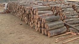 Rakomány fát loptak el Porrogszentkirályról
