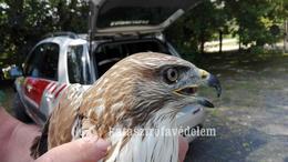 Előbb célba lőttek, majd madarat mentettek a somogyi tűzoltók