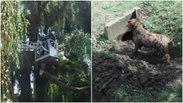 Kutyát, autót és telefonvezetéket is mentettek hétfőn a tűzoltók