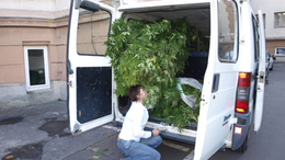 Mikrobusznyi marihuánát találtak a zsaruk