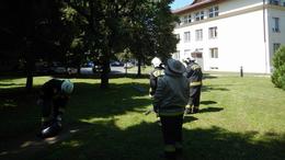 Kórháznál támadtak a lódarazsak