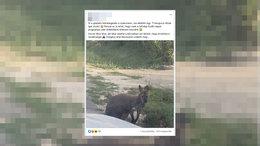 Szökött kengurut keresnek Somogyban