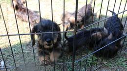 Több mint 101 kiskutya - elítélték a barcsi állatkínzót