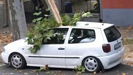 Fákat döntött a szél Somogyban