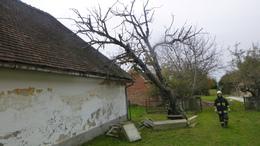 Egy megdőlt fa okozott riadalmat