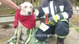 Kútba esett kutyát mentettek a tűzoltók