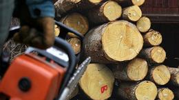 Ötezer forintot érő fát lopott, lecsukták