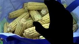 Bíróság elé állhat a kukoricatolvaj
