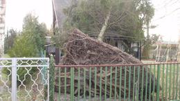 Fenyőfa dőlt a házra