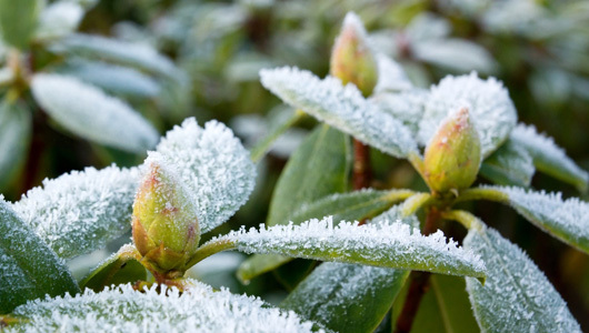 garden_frost_0.jpg