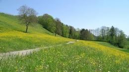 Hétvégére ismét visszatér a tavasz!