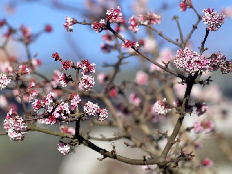 mti tavasz rügy