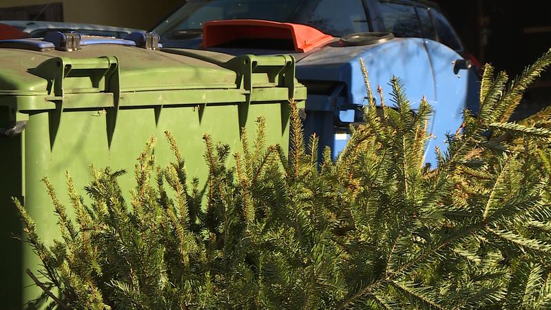 kidobott fenyőfa karácsonyfa